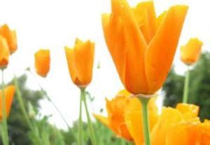 stabilizzare fiori i fiori di bach ansia depressione sfera emotiva