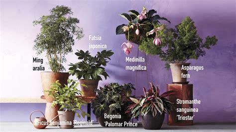 grow gorgeous houseplants   kind  light martha