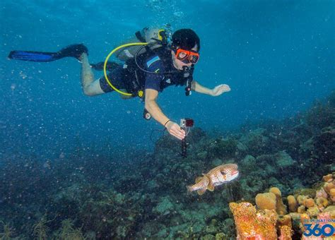 dive packages bonaire diving bonaire diving packages