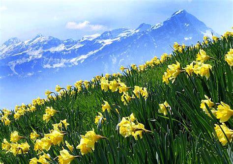 spectacular region  beatenberg berner oberland