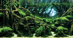 Aquascapes Designs Awesome Aquariums Winners Of The 2015 International