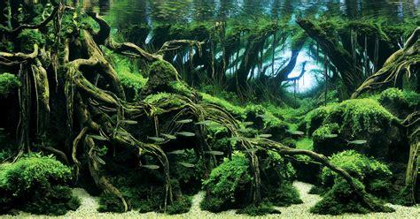 aqua design amano contest awesome aquariums winners of the 2015 international