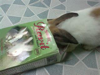 Makanan Kelinci Pakan Kelinci Pelet Kelinci Isi 7 Kg By Gosend rumah dan taman kelinci pelet pakan kelinci bernutrisi