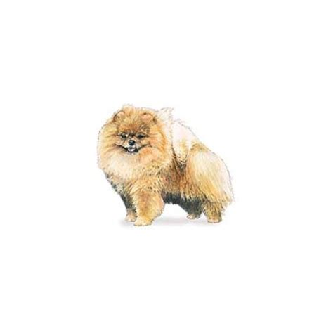 pomeranian accessories pomeranian kuka s world designer clothes and luxury accessories for pets