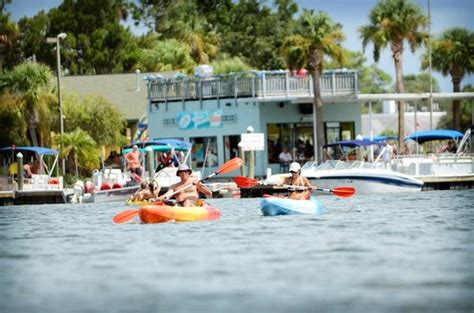 crystal river ale house kayaking in front of the port hotel marina the ale house crystal river picture