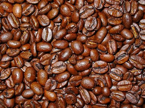 Kopi Coffee Bean coffea arabica 171 herbology manchester
