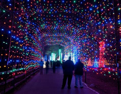 The Detroit Zoo Needs Your Help The Scene Zoo Lights Times