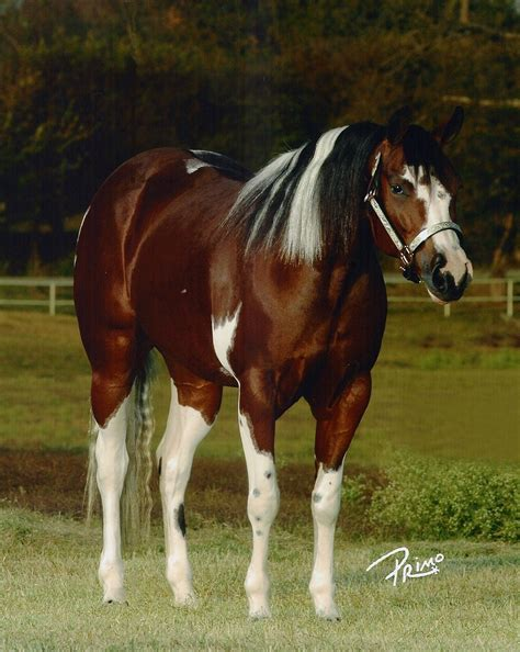 paint colors ideas 394 best thoroughbred the color images on equine