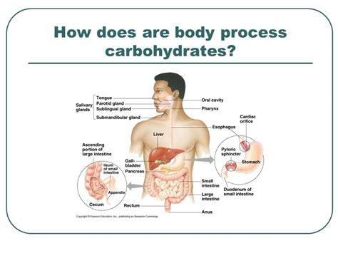 carbohydrates what does it do how can we live a healthy ppt
