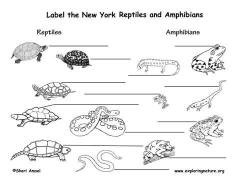 Hibians Worksheet by 100 Fish Hibians And Reptiles Worksheet Chapter