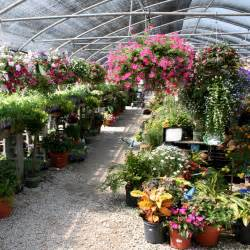 clover s garden centers home where beautiful things grow