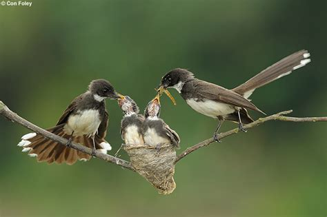 naturescapes net 2010 images of the year birds family