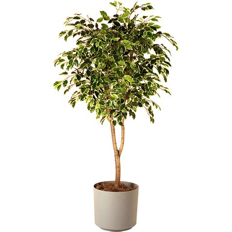 indoor tree planter want to keep your house cool without an ac bring these
