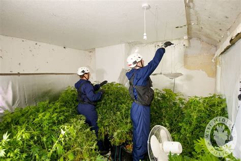 Marijuana Grow Ops Part 2 Cleaning Up A Grow Op Ontario Remediation Services