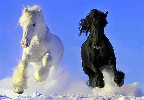 wallpapers hd fondos de pantalla de caballos varias fondo escritorio paisaje caballos