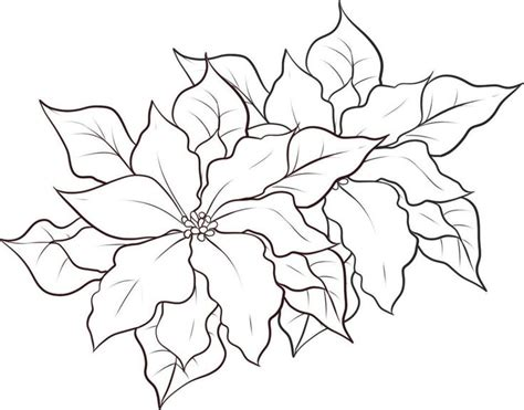 imagenes de pascuas navideñas para dibujar imagenes de flores de navidad para colorear y compartir