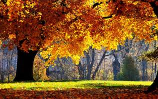 xs wallpapers hd beautiful autumn scenery wallpapers