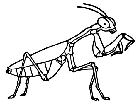 bed bugs color printable bug coloring pages coloring me