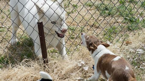 puppy barks at other dogs how to stop the fence wars 4 tips for dogs barking at each other rover