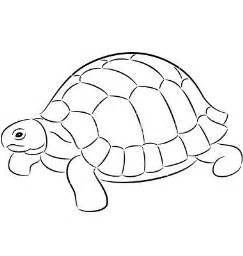 Turtle Outline Vector by Tortoise Coloring Pages For