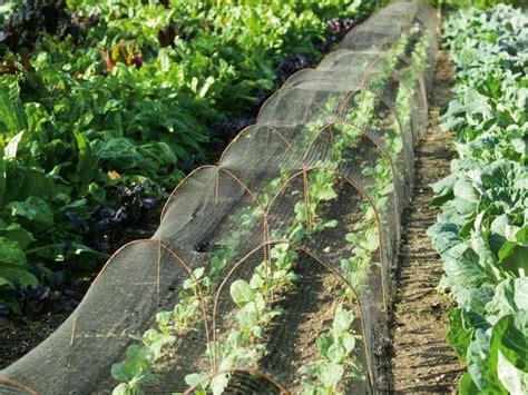 1000 Images About Garden Screening On Pinterest Gardens Vegetable Garden Bugs Leaves