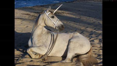imagenes de unicornios de verdad misterios ocultos existen los unicornios a 241 o 2016 youtube