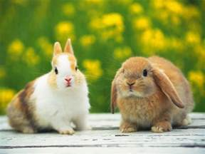 lovable images download rabbits pictures beautiful rabbit hd wallpapers free download