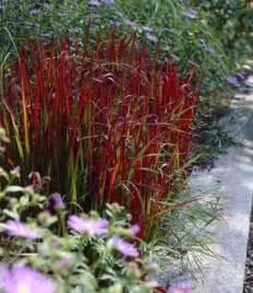 winterpflanzen für den garten pflanzen fr den balkon im winter inspiration design
