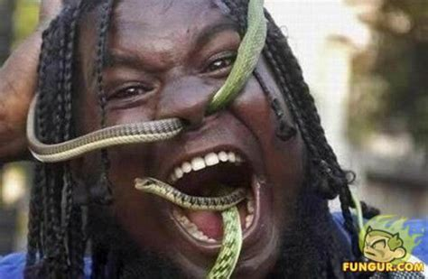snakes snakes eating animals