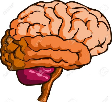free royalty free clipart brain clipart clipartion