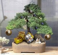 how do you bonsai christmas tree 5 reasons a bonsai tree is the gift bonsai outlet
