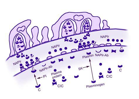 Children Of The Mechanism acute glomerulonephritis agn blue