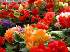 Colorful Flower Gardens Most Colorful Flowers In A Garden Eface In