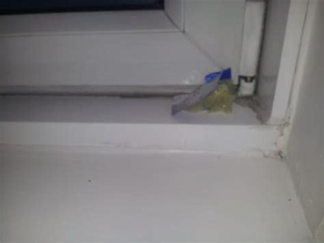 what section are condoms in used condom on window sill picture of the st john s
