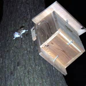 Flying Squirrel House Plans Douglas Squirrel Chickaree And Flying Squirrel Nest Box How To Make A Squirrel House I Want To