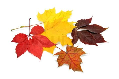 Colorful Autumn Leaves Over White Background With Clipping Path Stock Photo Colourbox Fall Leaves On White Background