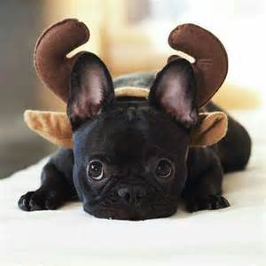 quot i was a french bulldog puppy i guess i m now a