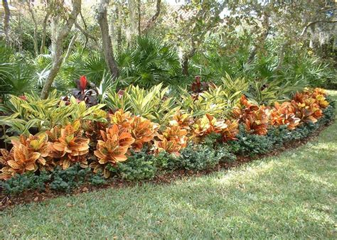 top 28 croton landscape ideas landscaping with bottle palms cabbage palm chinese landscape