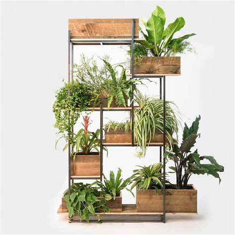 plant room divider 25 best plant rooms ideas on pinterest