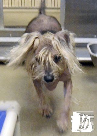 Kalina Puff 146 best images about york county spca on