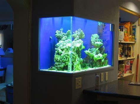 Aquarium In Wand by In Wall Aquarium Kitchen Reef Workshop My Style