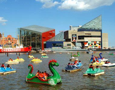 paddle boats harbor paddleboats in baltimore s inner harbor with the aquarium