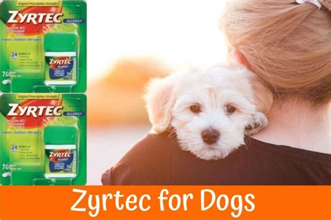 allergy medication for dogs zyrtec for dogs the best allergy medication a guide and review in 2017 us bones