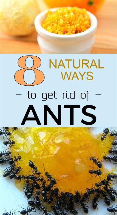 8 ways to get rid of ants 101cleaningtips net