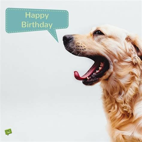 Happy Birthday Wishes Dogs 25 Original Happy Birthday Pictures That Will Make Someone