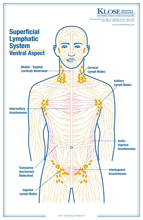 lymph node locations inner archives page 53 of 73 human anatomy chart