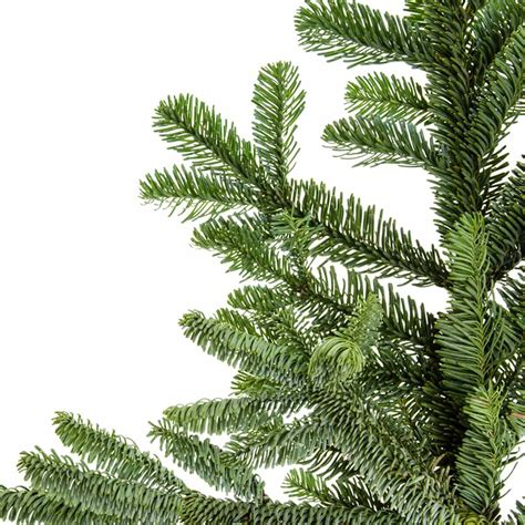 best christmas tree species the 10 best real tree species the family handyman