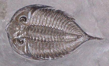 arthropoda classification subphylumclasses