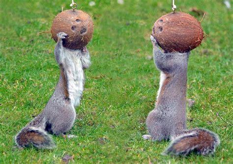 horse head squirrel feeders