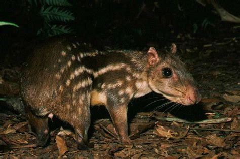 Floor Animals by 10 Snapshots Of Belizean Wildlife Belize Animals Caribbean Critters